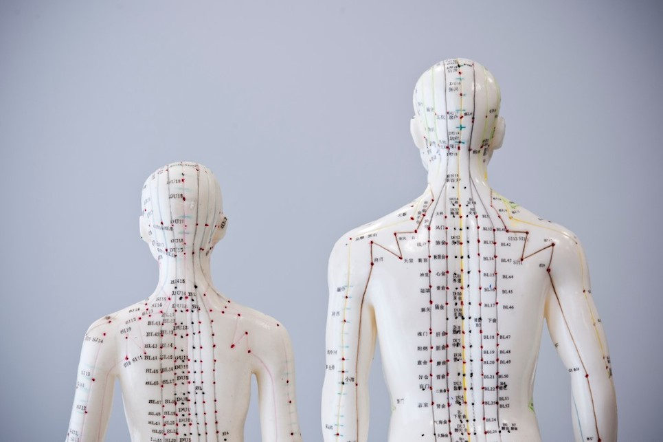 7Middx_Uni_Park_Clinic_Acupuncture_models_RB_14_32.jpg
