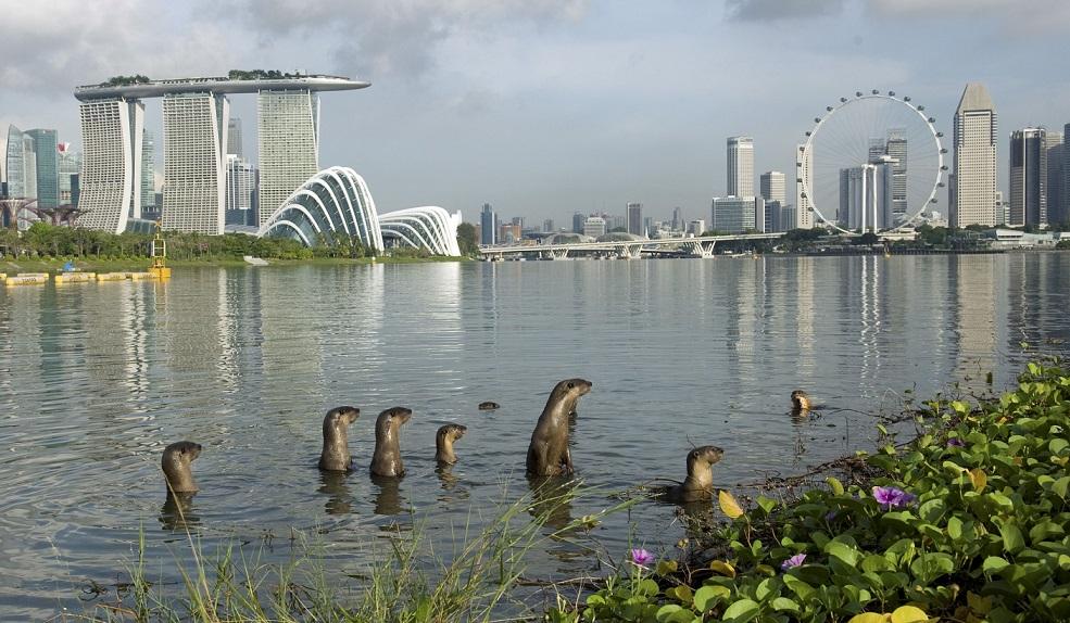 Otters Singapore smaller.jpg
