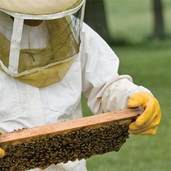 Bee keeper.png