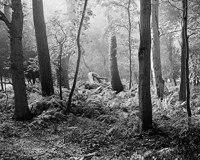 Robin Lambert photography