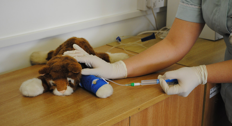 A veterinary nursing student testing on a toy animal
