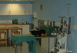 Veterinary Nursing