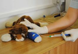 Veterinary nursing Middlesex University