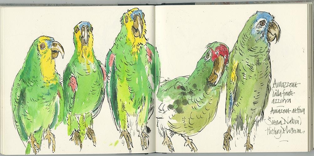 Stuffed Parrots - Martin Ursell