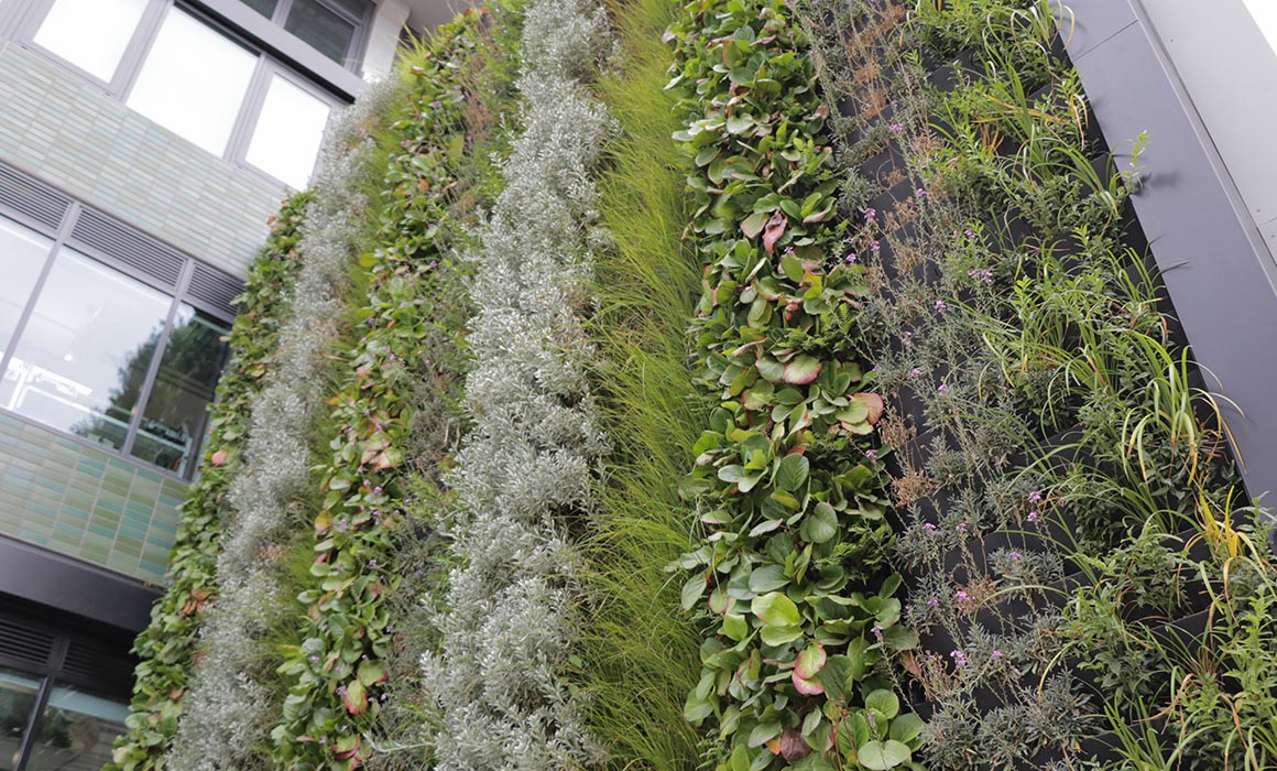 Middlesex University's Living Wall