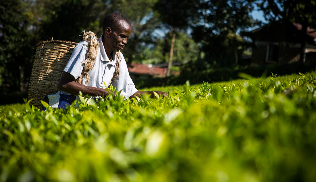Fairtrade producer farming in the field