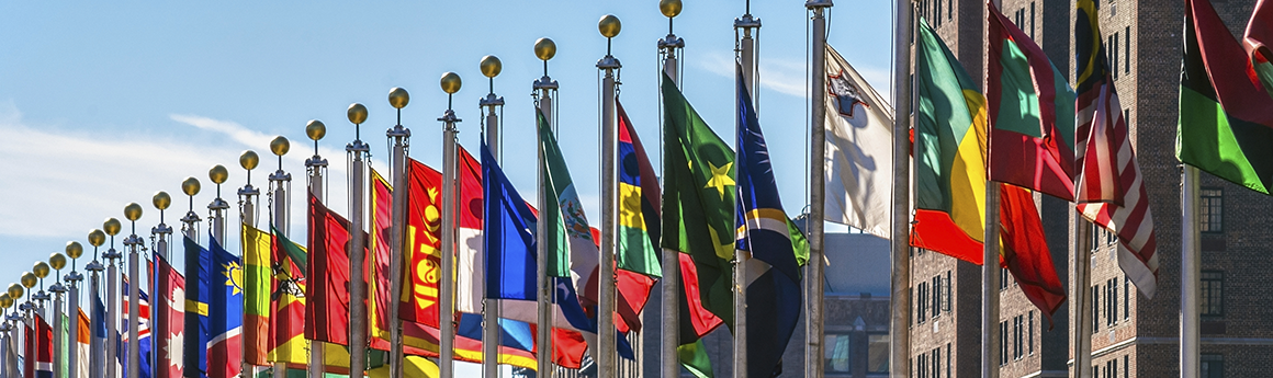 LLM International Minority Rights Law